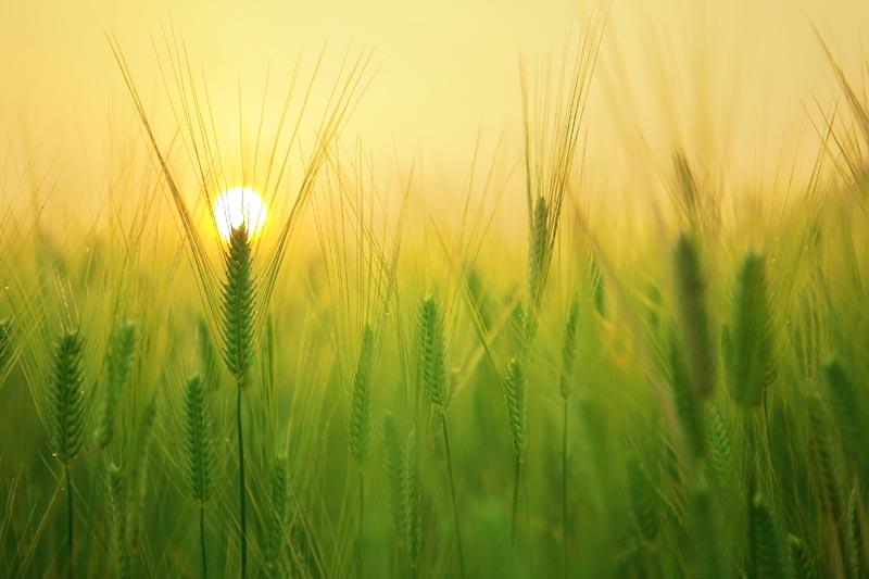 Arjama gezondheidspraktijk bij allergie en hooikoorts